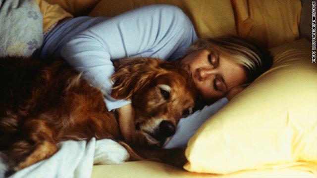 t1larg-dog-sleep