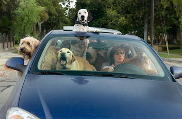 too-many-dogs-in-a-car