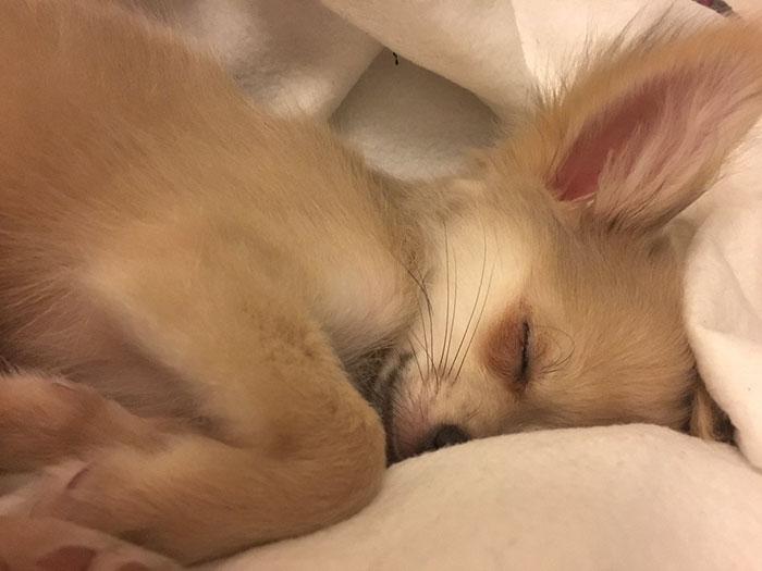 Cosa sognano i cani? La risposta farà commuovere tutti!