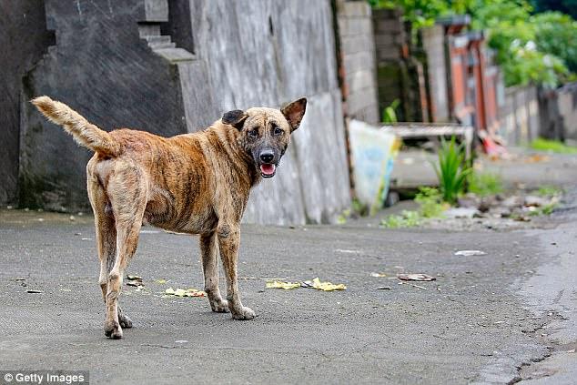 """Turisti mangiano carne di cane a Bali, la spacciano per """"carne di pollo""""."""