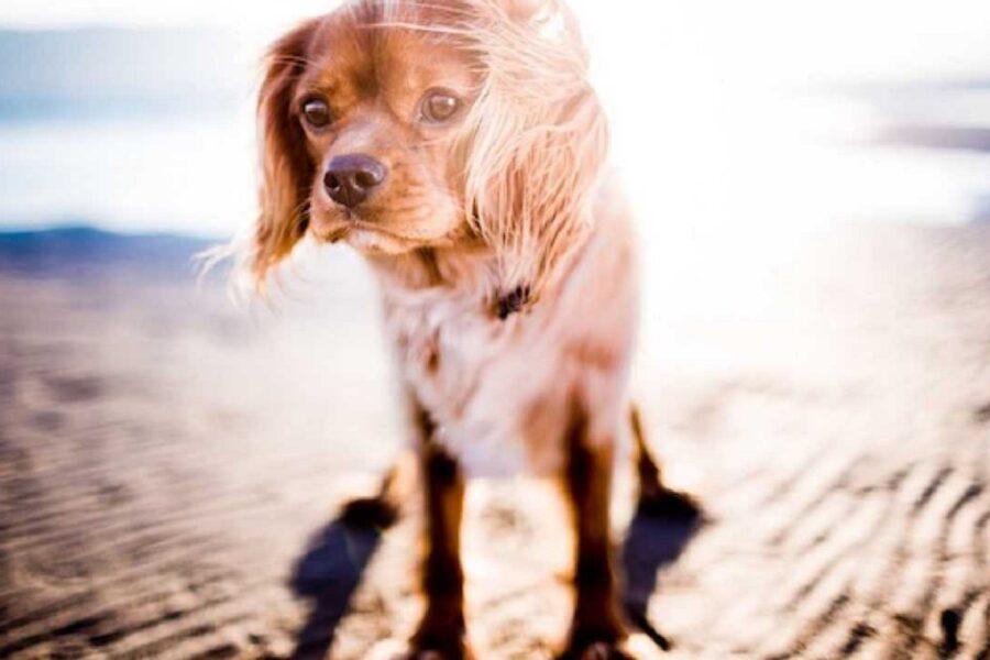 cane sotto il sole alto