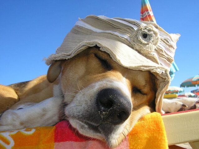 cane che prende il sole