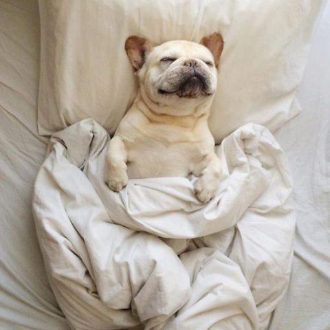 12 Simpatiche foto di cani che prima ti rubano il letto e poi anche il cuore!