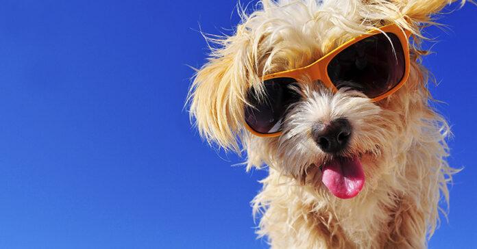Cane con occhiali da sole e lingua di fuori