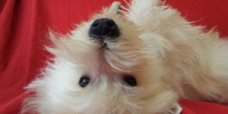 cane tenero sul letto