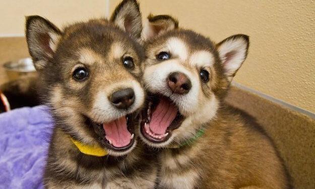 cuccioli che sorridono
