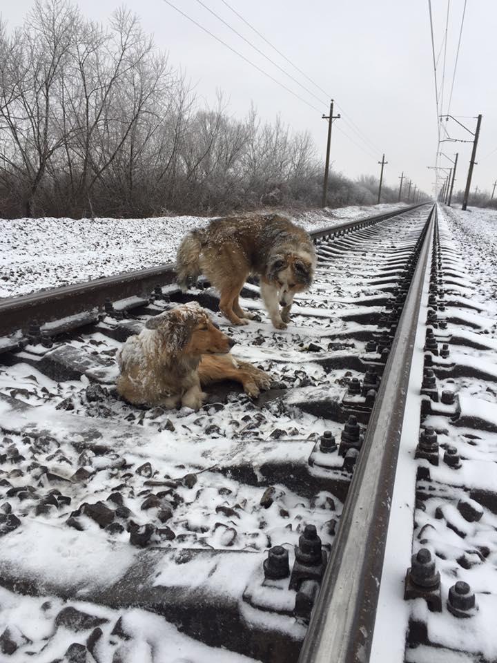 Un cane ferito si trova sulle rotaie e il treno sta arrivando, ma poi succede qualcosa di inaspettato!