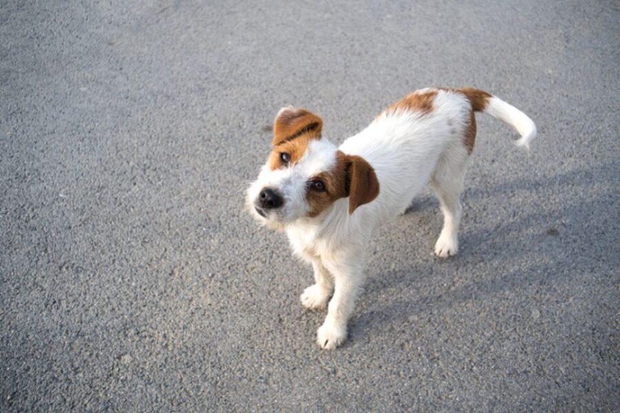cane sull'asfalto