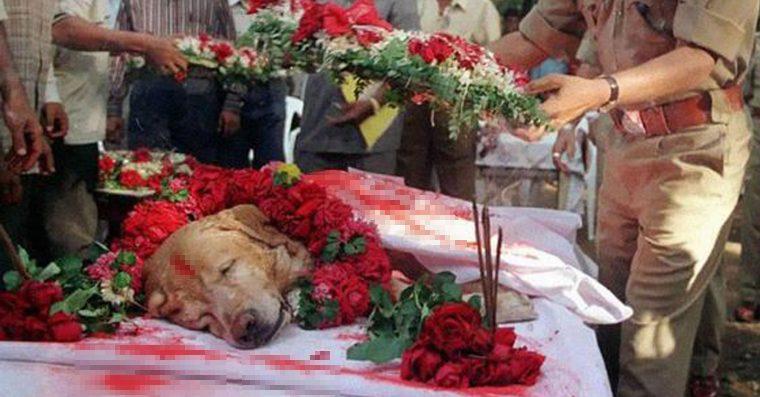 Durante un matrimonio il cane di famiglia attacca, senza motivo, una bambina innocente. Ma poco dopo lui perde la vita e tutti scoprono qual'era il vero motivo.