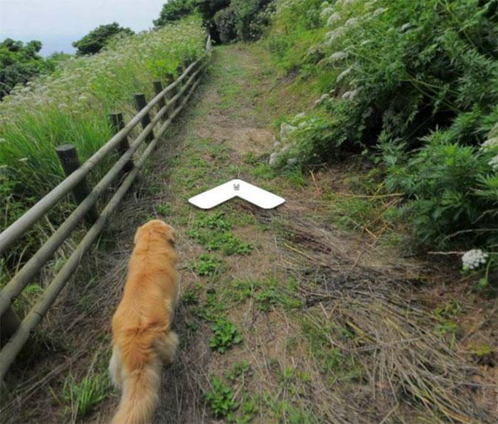 Questo cane segue un fotografo di google street view e appare in tutte le foto scattate!
