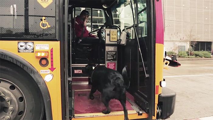 dog-rides-bus-seattle-eclipse-11-5948c8aa82ba8__700