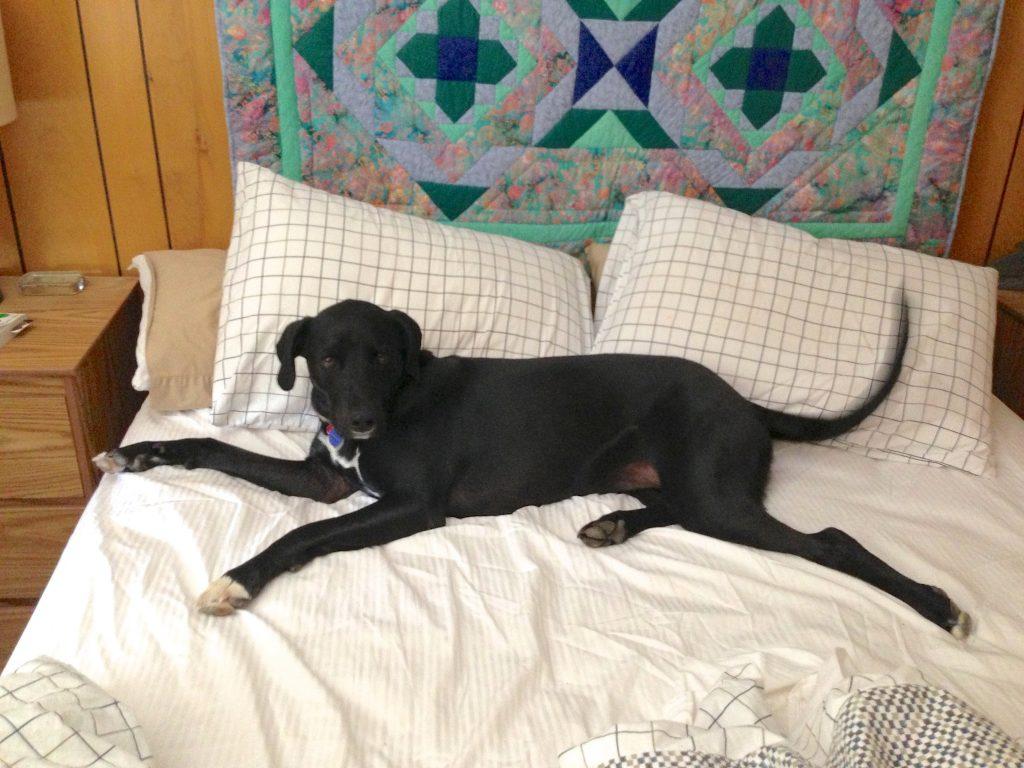 Dormire con il cane: ecco perché dovresti farlo!