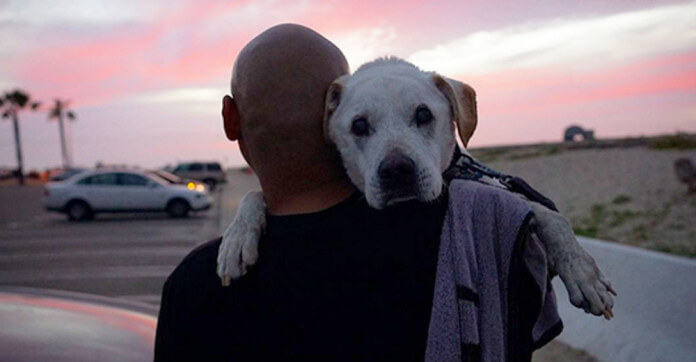 Cane anziano realizza tutti i suoi desideri prima di morire.