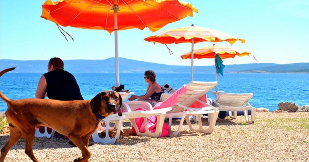 Spiagge libere anche per i cani