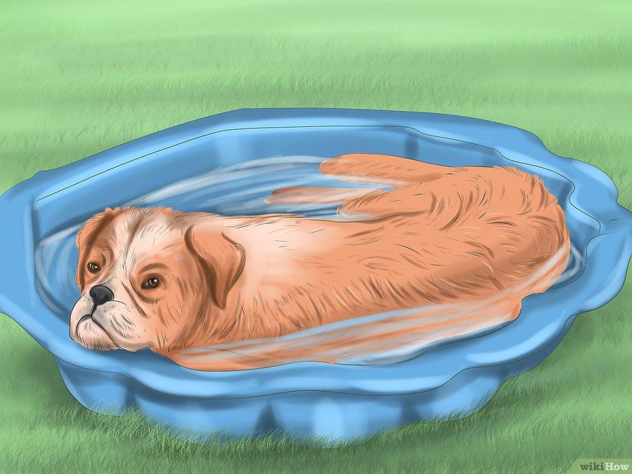 ESTATE: Come mantenere un cane fresco quando fa troppo caldo