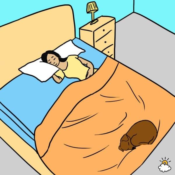 Perché dovreste dormire con il vostro cane?