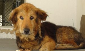 La cagnolina è vecchia, la lascia in un canile: la storia di Cutie