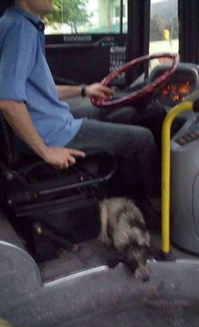 Un gesto bellissimo nei confronti di alcuni cani randagi fa il giro del mondo
