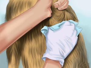 Il tuo cane emana un odore forte? Ecco come migliorare la situazione