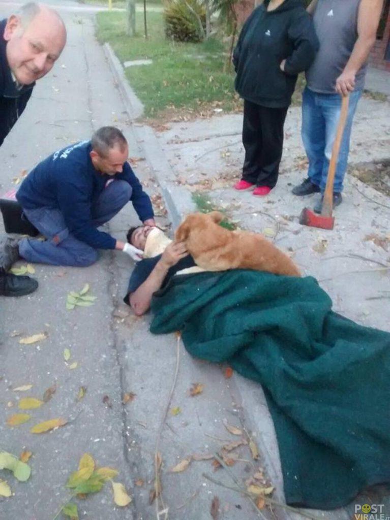 cane-si-rifiuta-di-allontanarsi-dal-padrone-ferito-fino-allarrivo-dellambulanza-ecco-le-foto-2-767x1024