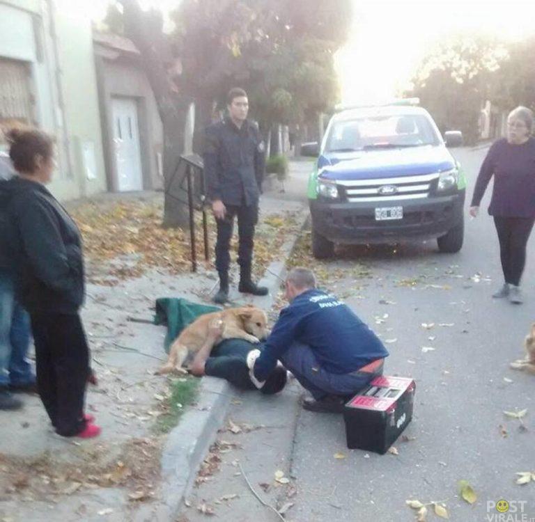 cane-si-rifiuta-di-allontanarsi-dal-padrone-ferito-fino-allarrivo-dellambulanza-ecco-le-foto-3-768x750