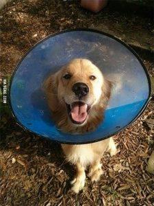 Un uomo trova un cane che si era smarrito dopo una tempesta. Pochi giorni dopo scopre