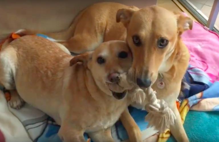 Vogliono sopprimerlo ma il veterinario riesce a salvarlo