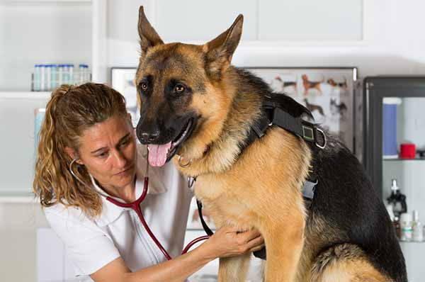 Ecco come risolvere il problema della dermatite e ridurre drasticamente la caduta del pelo del cane!