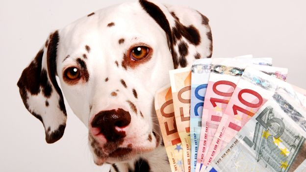 1cani-e-soldi_quanto-costa-mantenere-un-cane