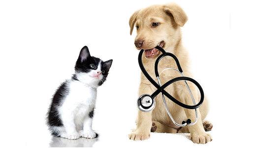 a-varese-e-stato-attivato-il-servizio-di-ambulanza-veterinaria