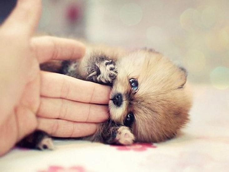 amare-gli-animali-significa-conoscere-il-significato-dellamore