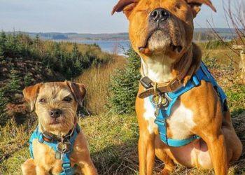 Amos e Toby, l'amicizia di un cane cieco con il suo cane guida