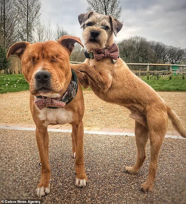 Amos e Toby