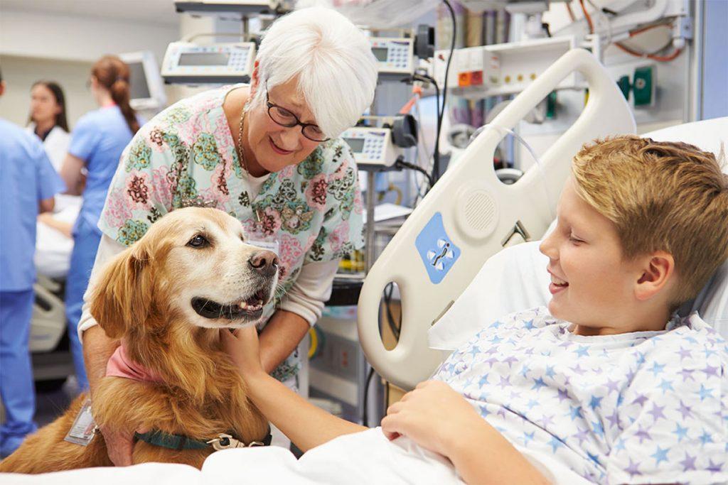 Cane che assiste un bambino malato