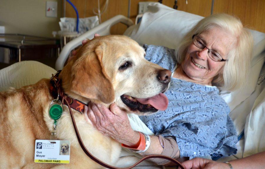 Cane che assiste una paziente