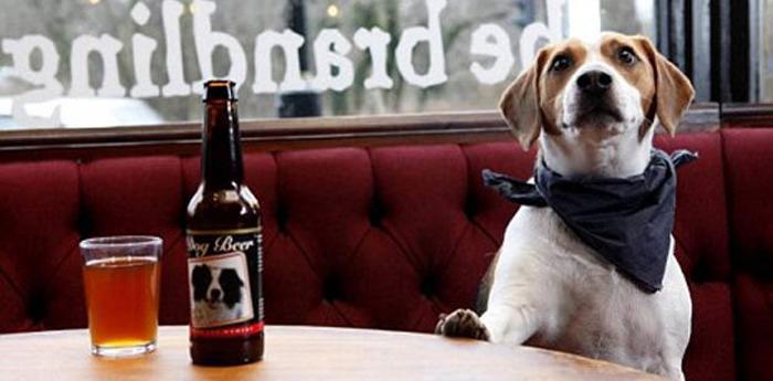 Cane che beve una birra