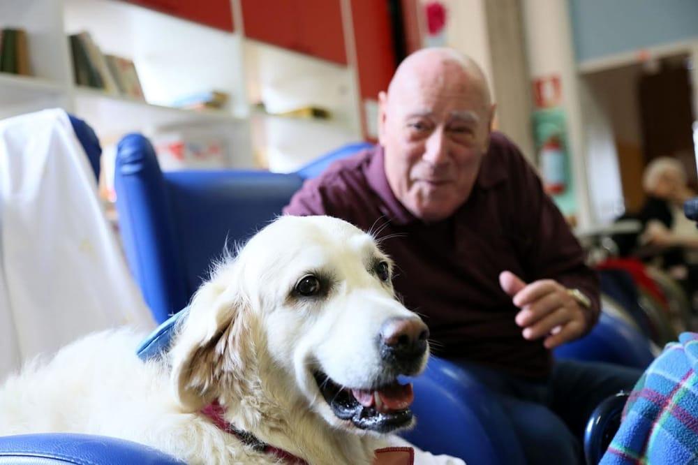 Cane che fa compagnia ad un paziente in ospedale