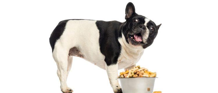 Come alimentare un cane diabetico?