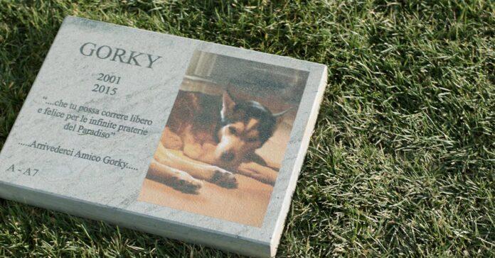 Cani e gatti sepolti insieme al padrone ecco dove si può fare