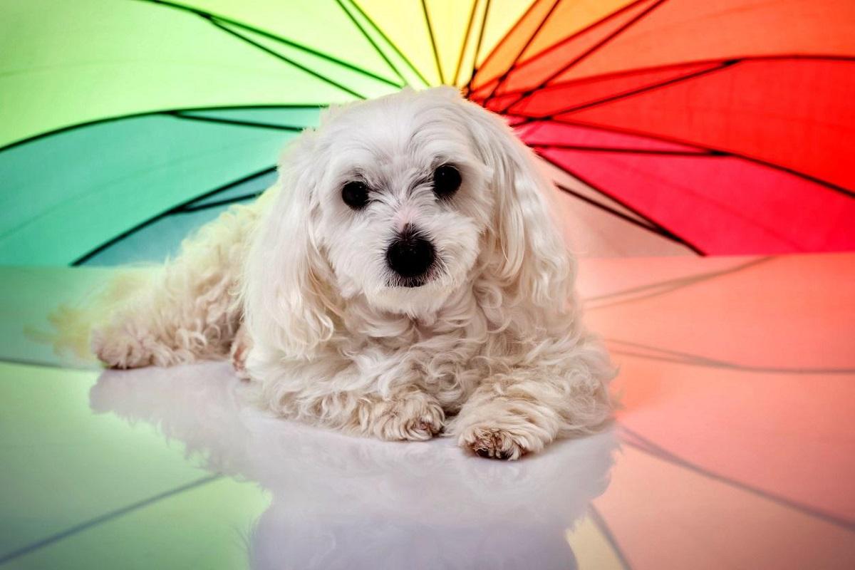 cane davanti a ombrello colorato