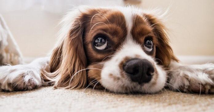 E' vero che i cani si allontanano quando sentono la loro morte vicina
