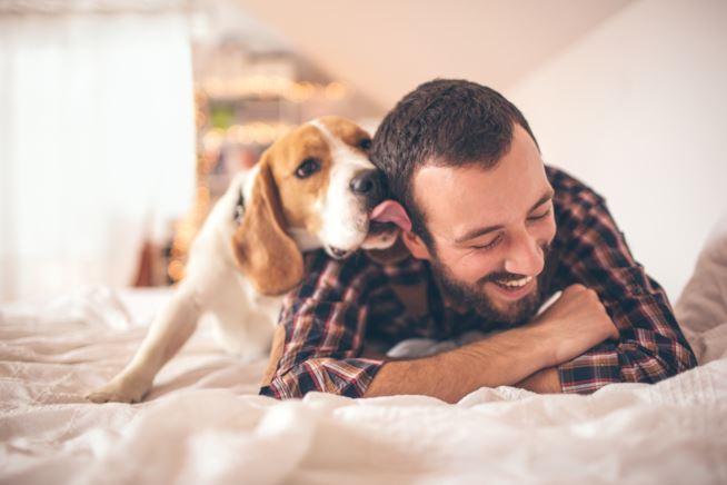 Ecco come i cani combattono la depressione