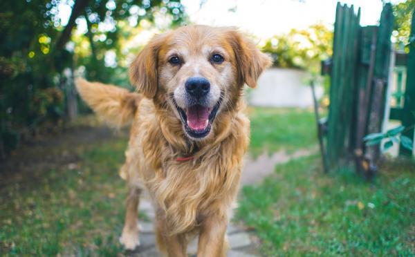 ecco-perche-adottare-un-cane-allunga-la-nostra-vita