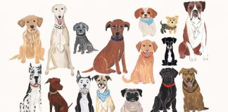ecco-quale-e-la-miglior-razza-di-cane-per-ogni-segno-zodiacale