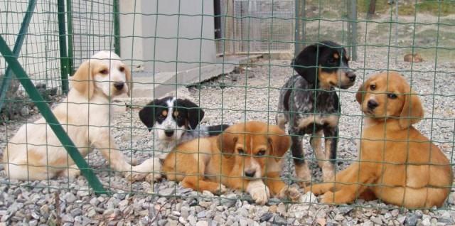Genova, versamento di 250 euro per chi adotta un cane