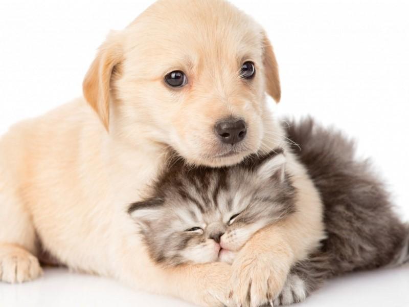 i-cani-e-i-gatti-hanno-gli-stessi-diritti-degli-esseri-viventi