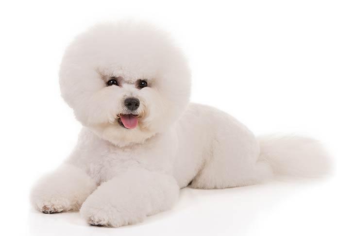 Ecco quale è la miglior razza di cane per ogni segno zodiacale