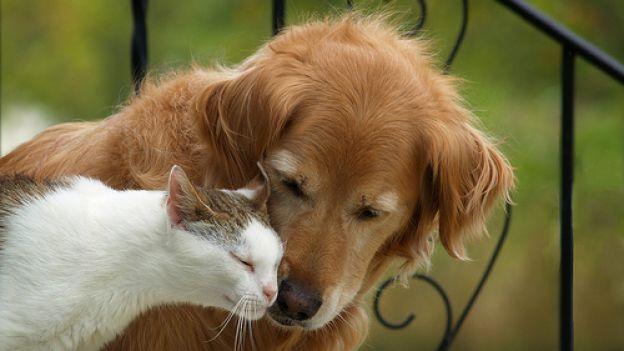 in-francia-i-cani-e-i-gatti-hanno-gli-stessi-diritti-degli-essere-viventi
