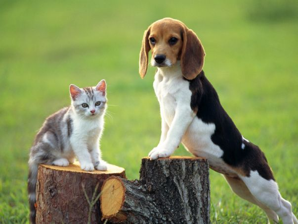la-nuova-proposta-di-legge-in-francia-che-concede-ai-cani-e-ai-gatti-gli-stessi-diritti-degli-esseri-viventi