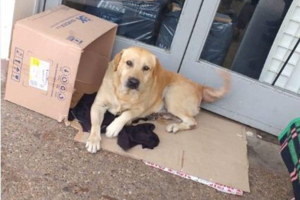 Toto, il cane che attende il padrone defunto fuori dall'ospedale